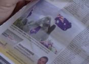 Koala the media tart. Photo in french newspaper