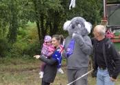 Koala in the rain with friends
