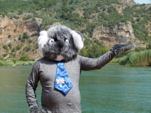 Koala at the tombs in Dalyan - Turkey