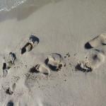 Jenny's footprints