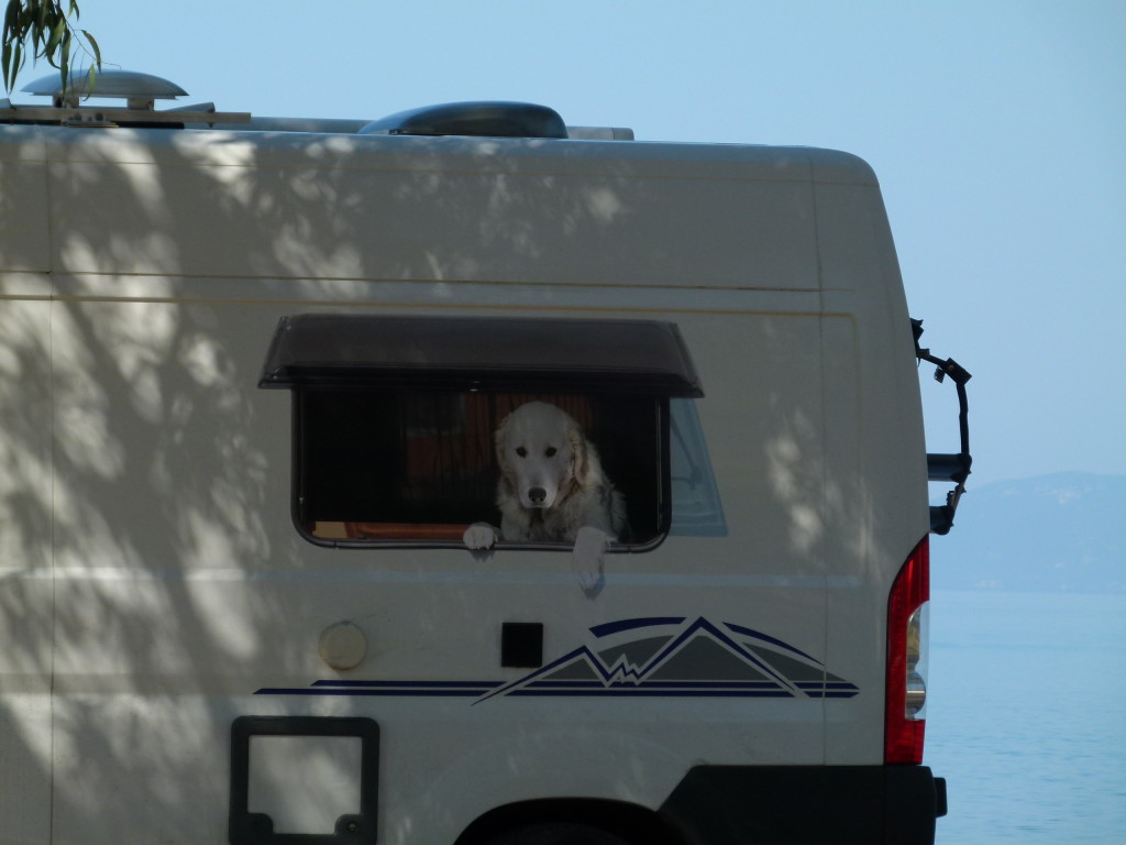 Our German neighbors for the night had this photo on the side of there motorhome. There is no window or dog just a convincing sticker. The dog they had with them was the dog in the picture Sammy who was very friendly.