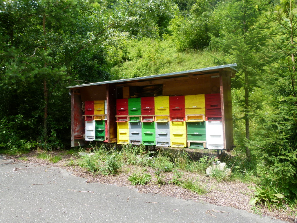 We took a wrong turn and found some colorful bee hives on the side of the road.