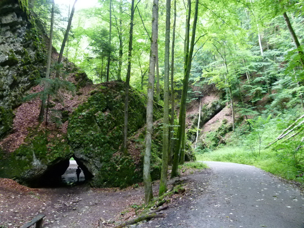 A walk through the forest to the cave entrance.