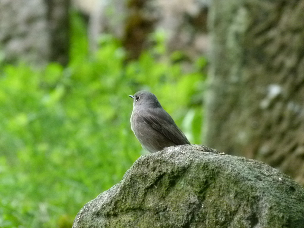 Bird life in the Cemetary
