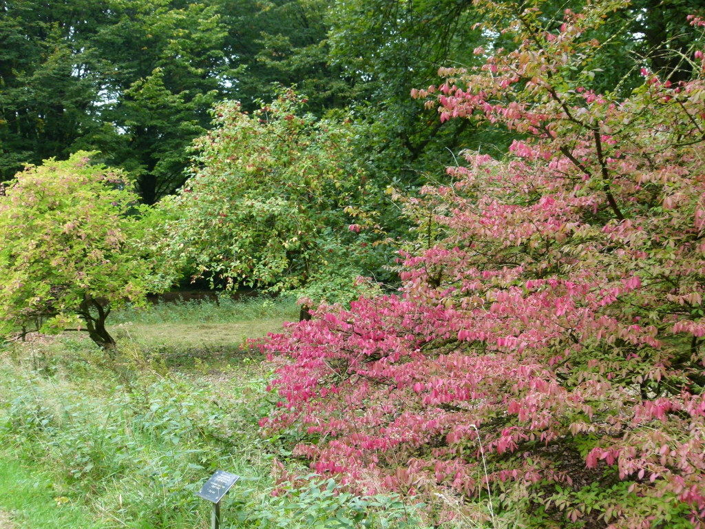 Trees and shrubs from all over the world.