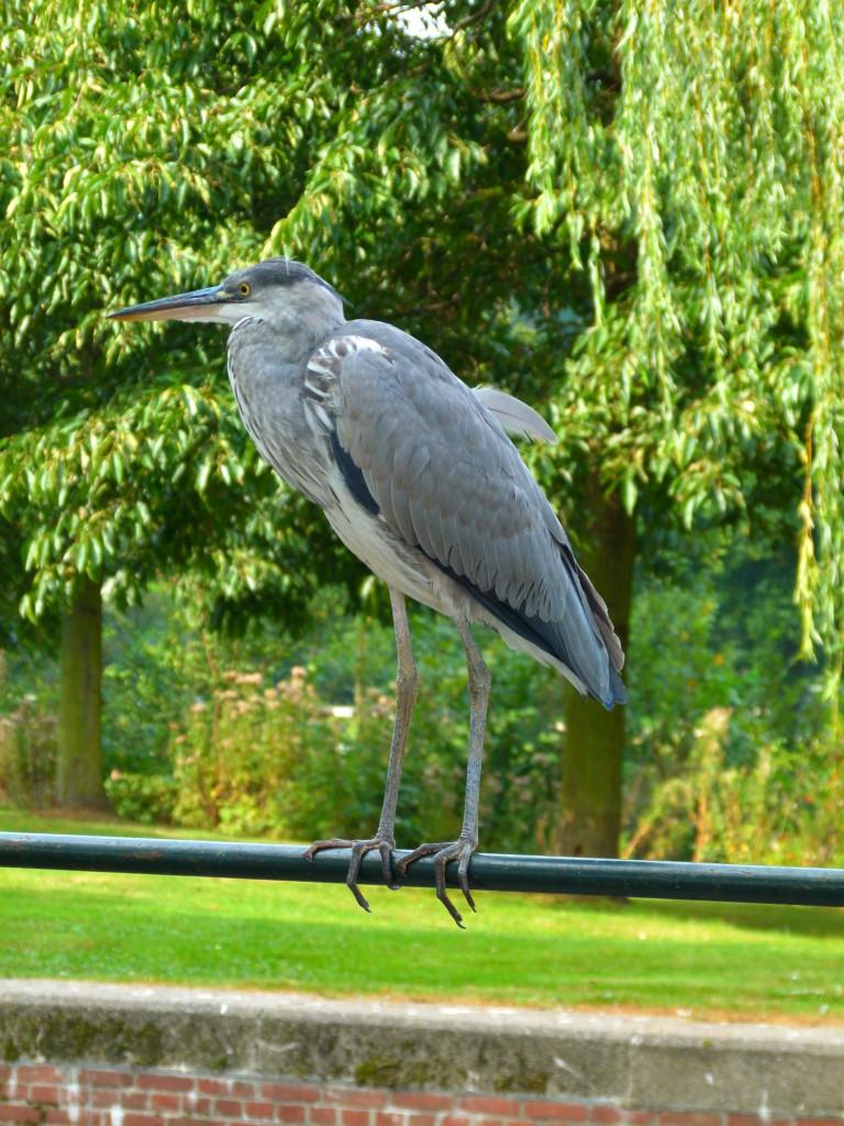 Crane in park, Amsterdam