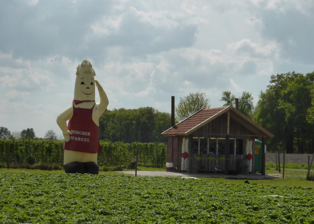 It's asparagus season in Germany and here is a giant