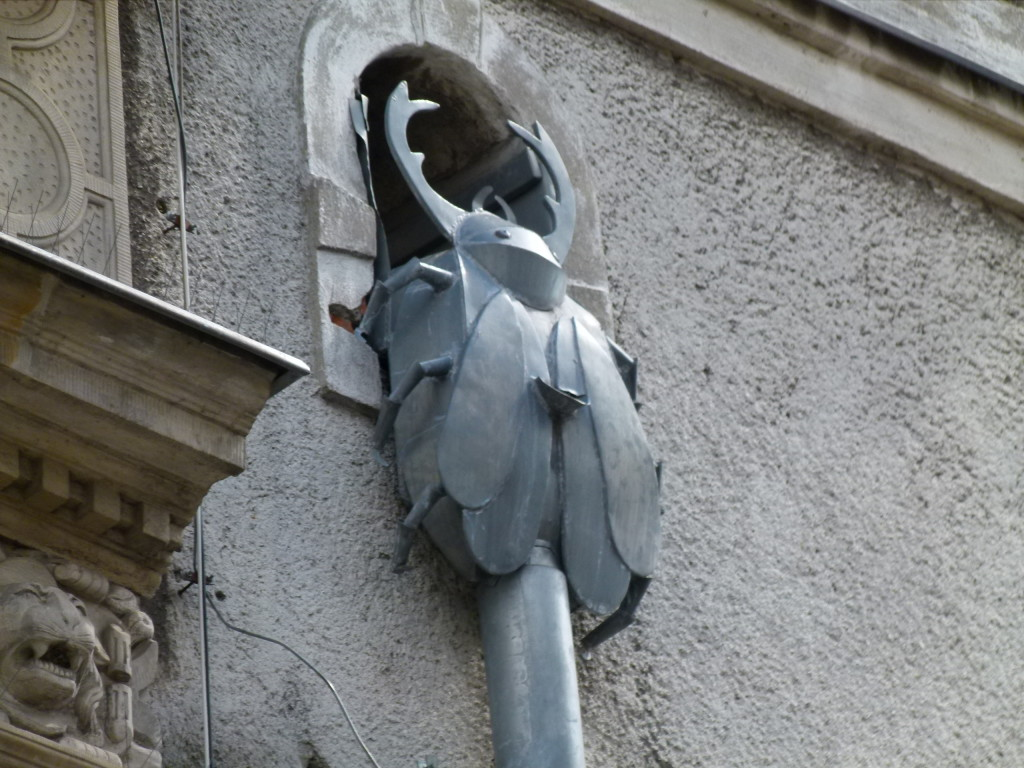 In this street they had many different downpipes. This is of a beetle, others were elephants, owls etc.