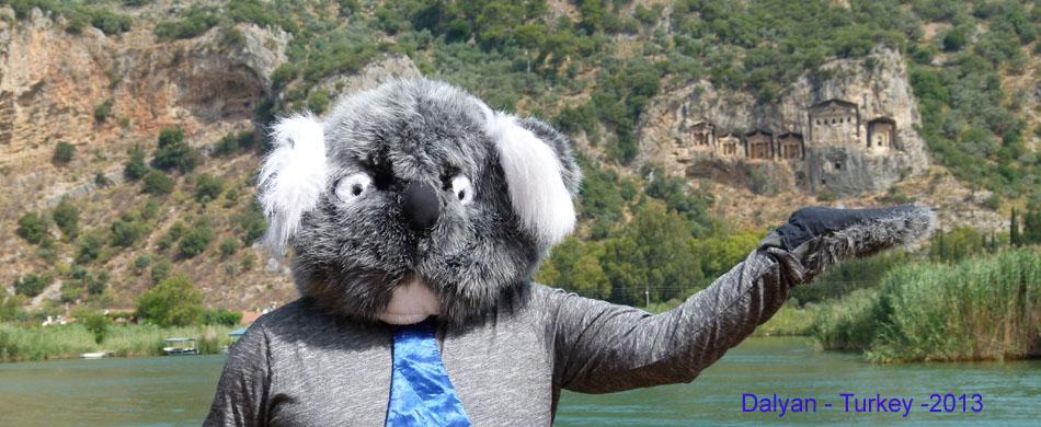 koala dalyan w