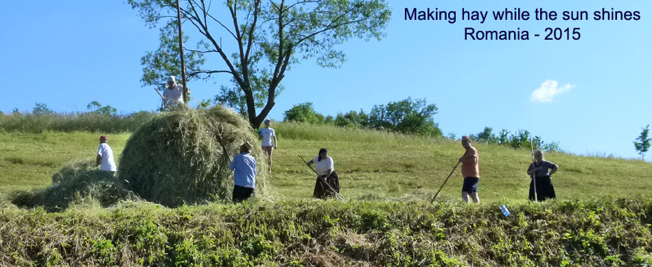 making hay - Romania 2015