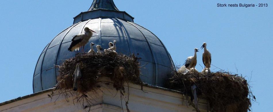storks Bulgaria w
